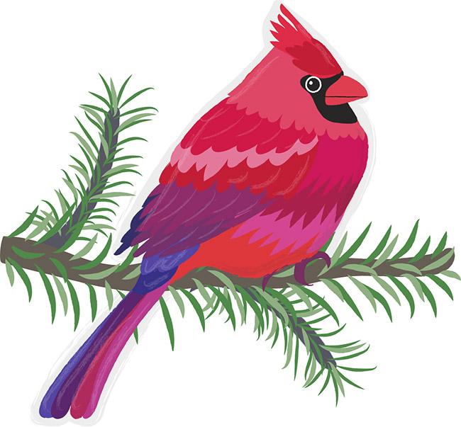 Beautiful Birds Illustrations
