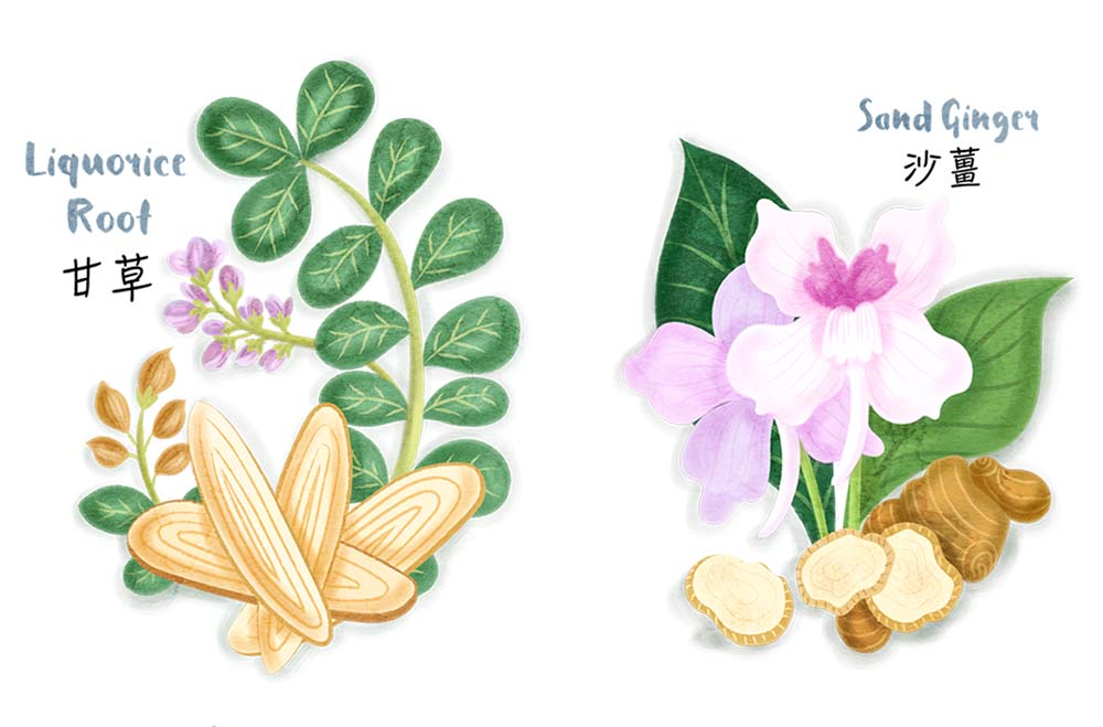 chinese spices floral illustrations