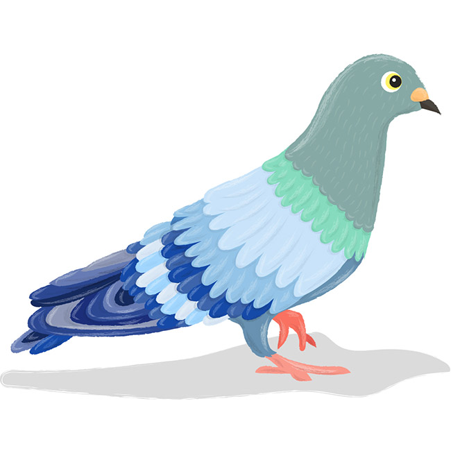 Pigeon illustration - photo#4