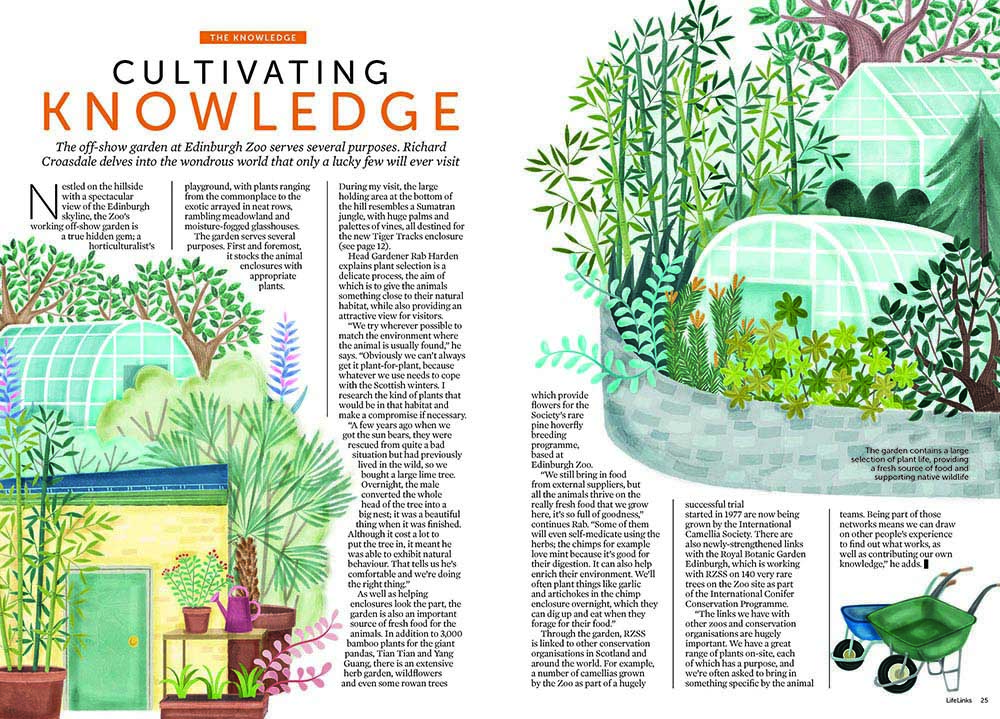 RZSS Edinburgh Zoo Lifelinks Magazine Illustration