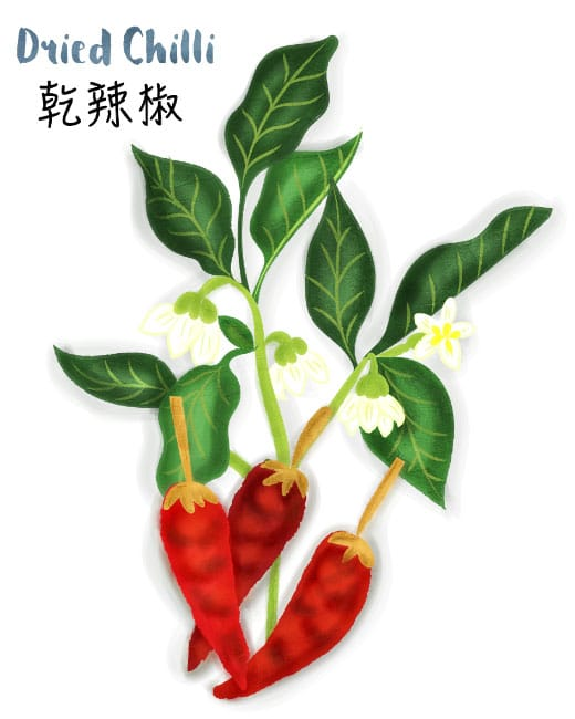 dried chili illustration