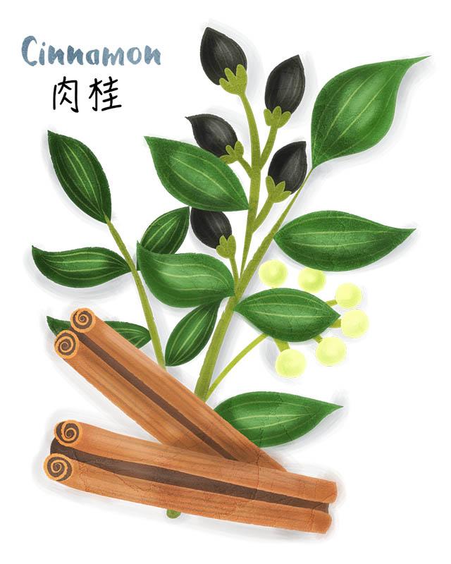 Cinnamon Stick Illustration