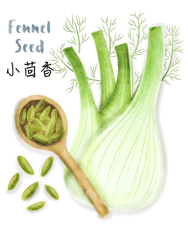Fennel Seed Illustration