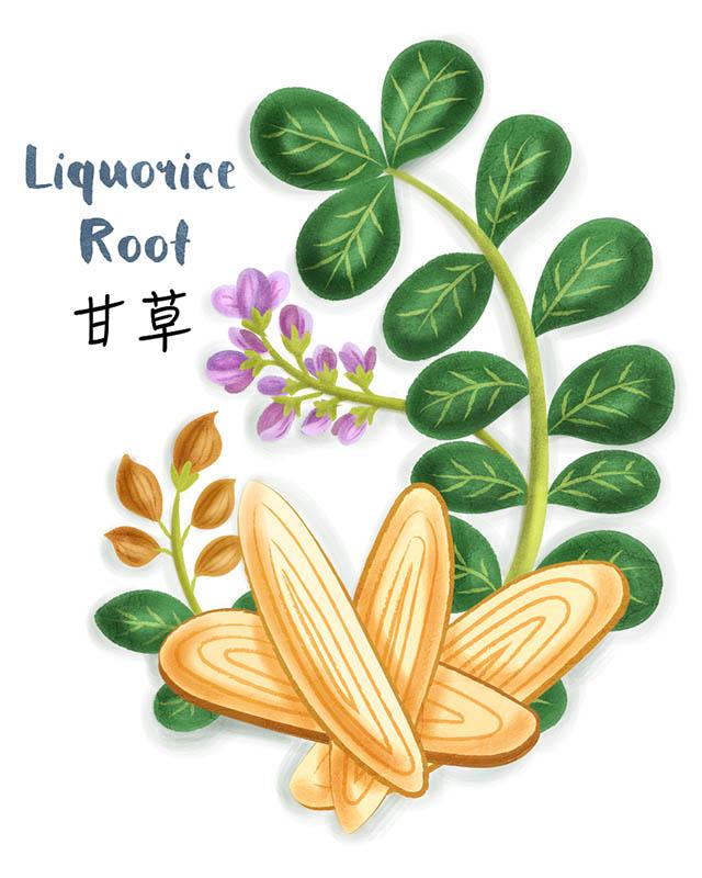 Liquorice Root Illustration