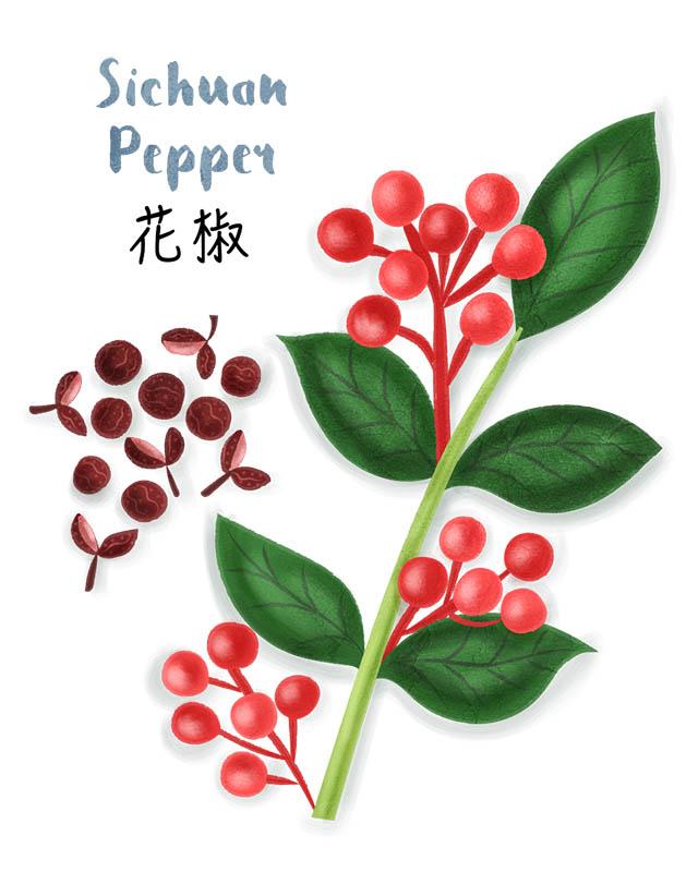 Sichuan Pepper Corn Illustration