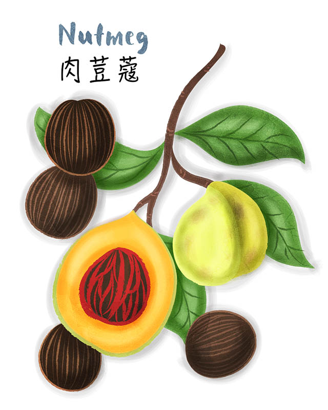 Nutmeg Illustration