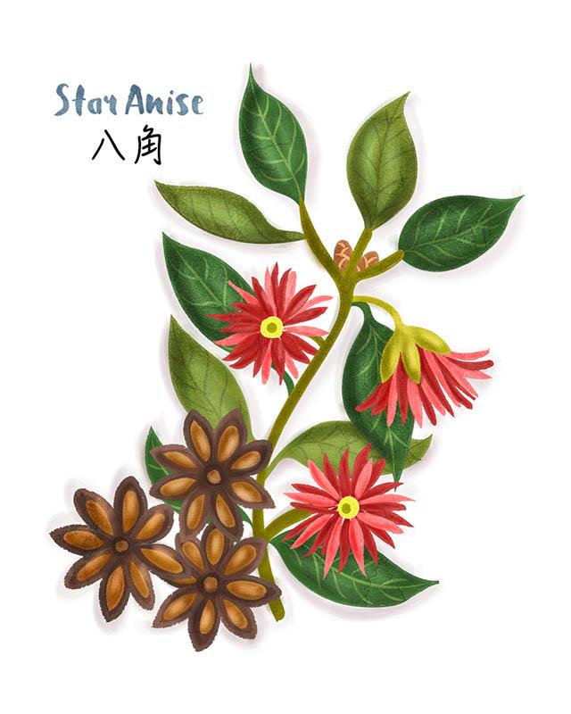 Star Anise Illustration