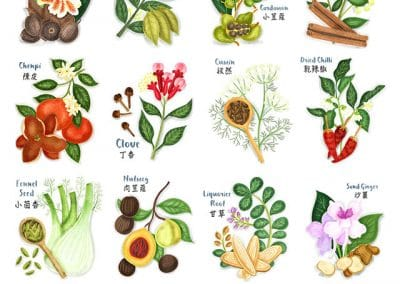 Chinese Spices Illustrations
